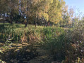 Two plots with a lake on the territory in Kozin. Kiev region