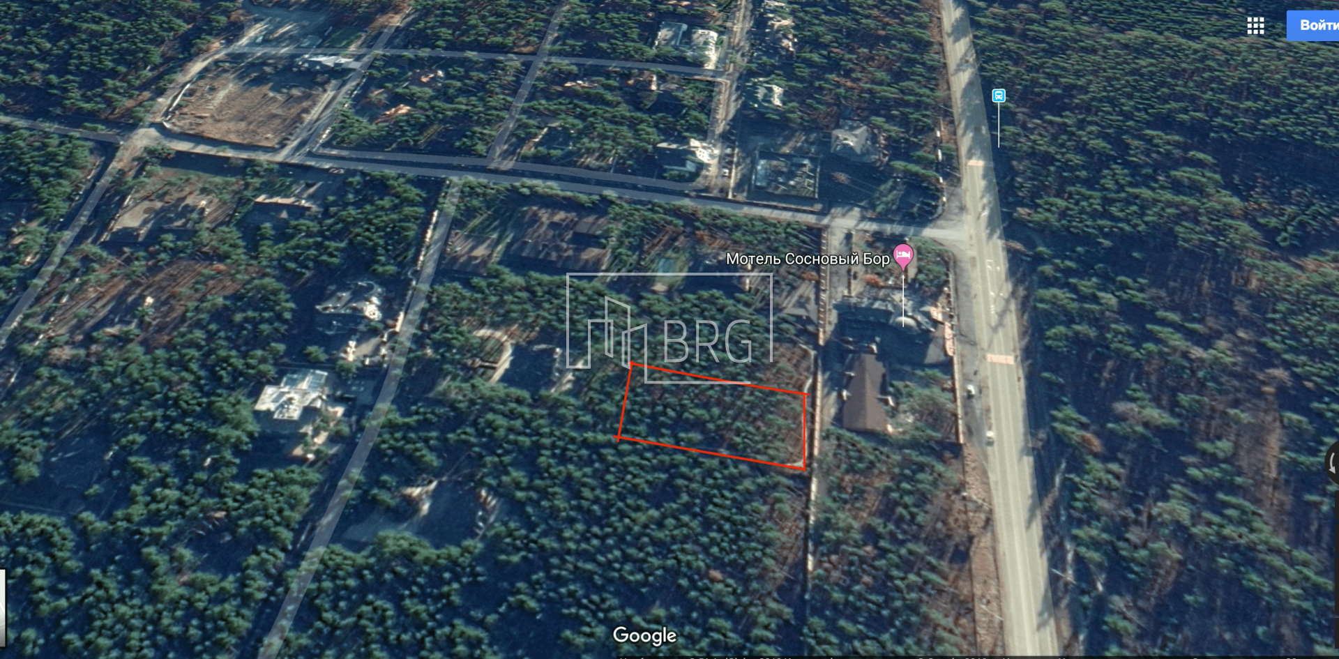 Plot with perennial pines cottage town Sosnovy Bor. Kiev region