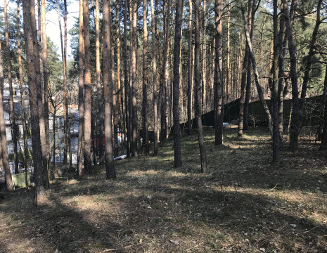 Plot in KG South with perennial pines in the territory. Kiev region